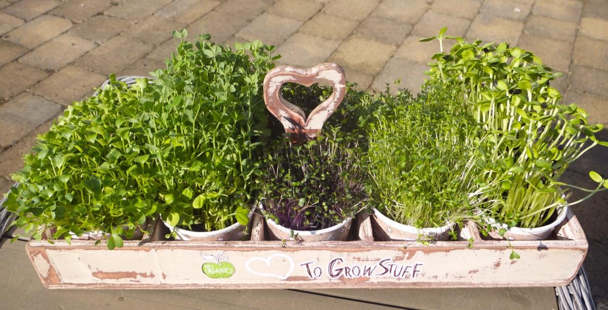 My Organics Hamper