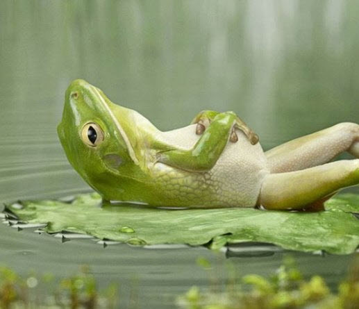 Bloated-Frog