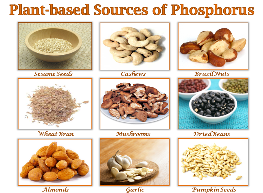 plant-based-sources-of-phosphorus