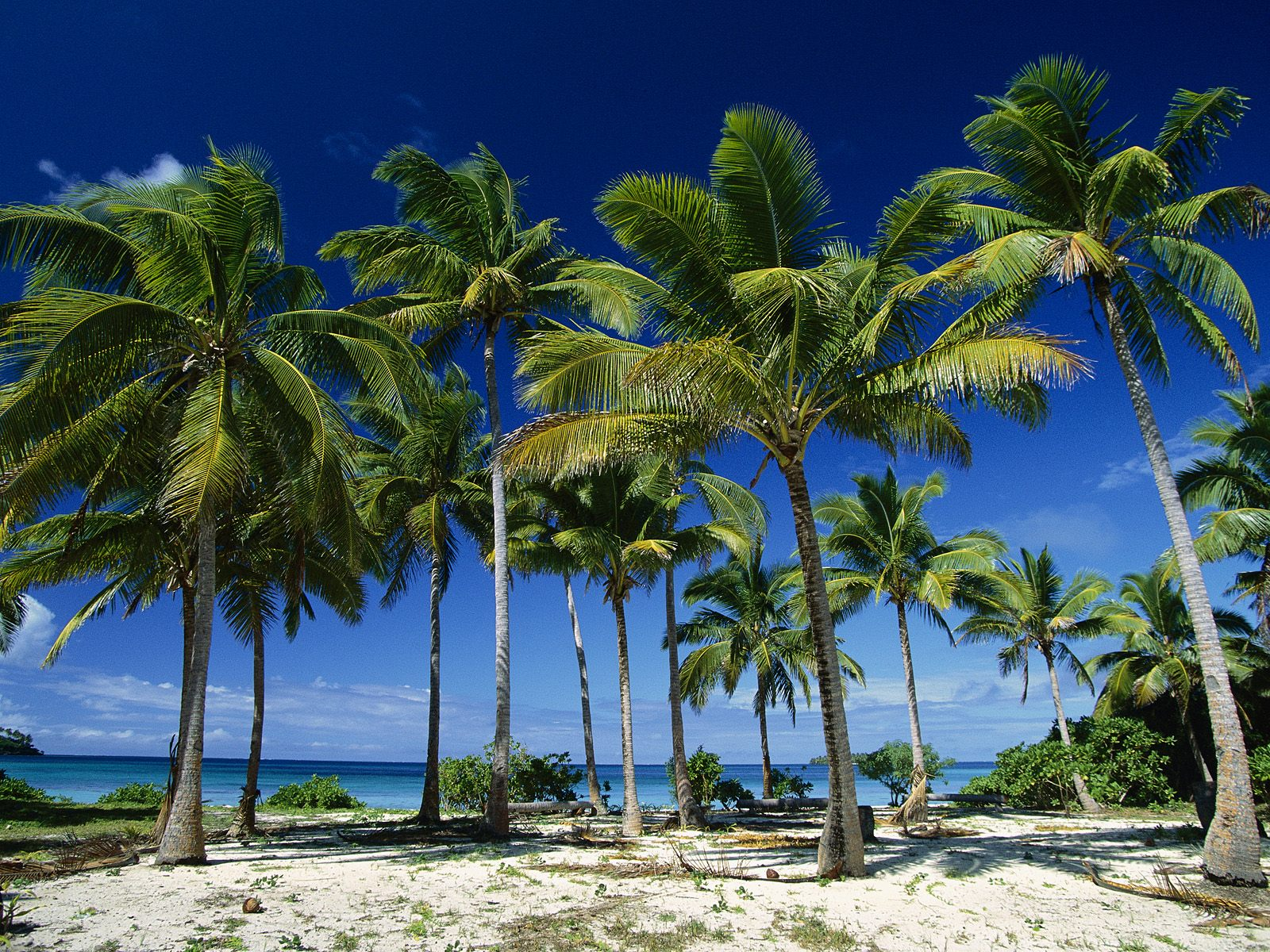 155894-coconut-palm-tree-island
