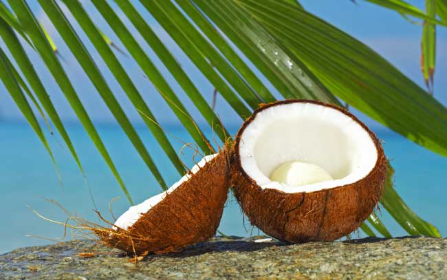 coconut-palm-tree
