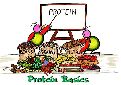 protein-basics
