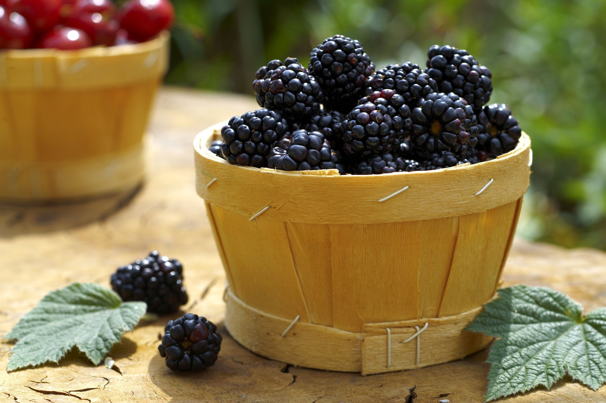 Blackberries-in-a-Basket-579115183df78c17345e90ca