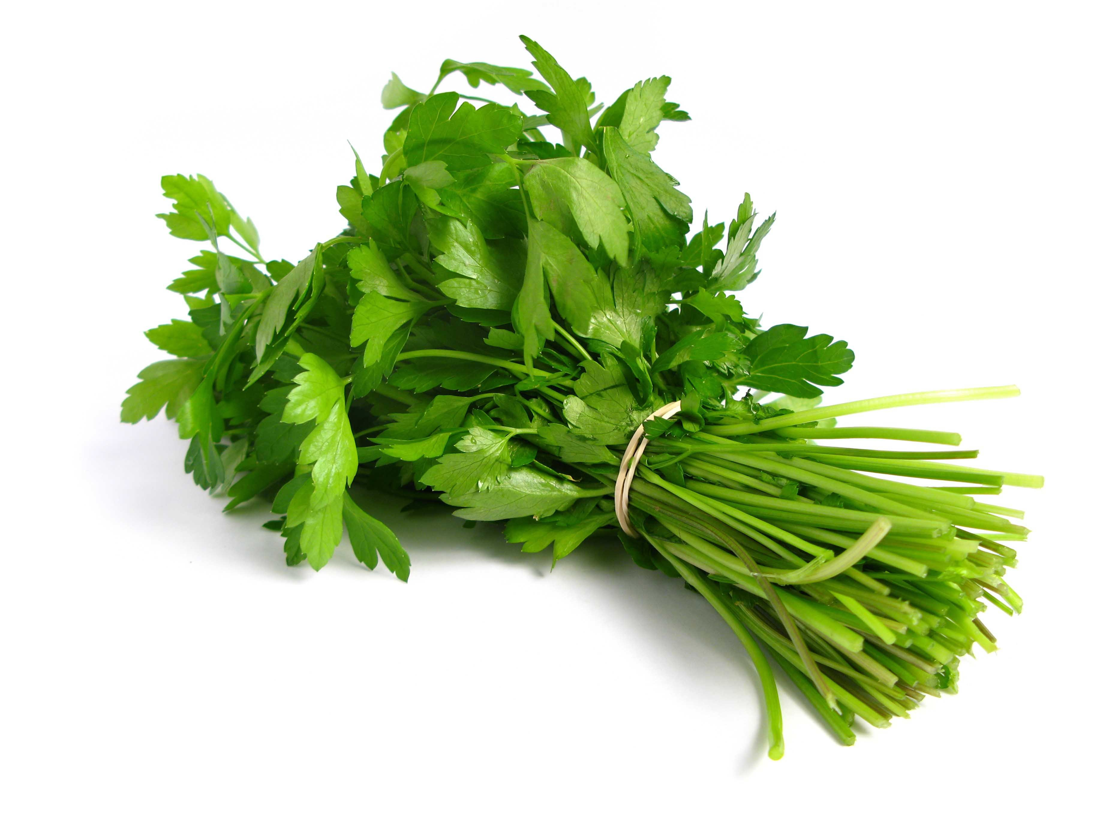 Coriander-Bunch