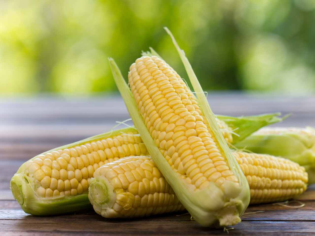how-to-grow-sweetcorn-203392618-1280