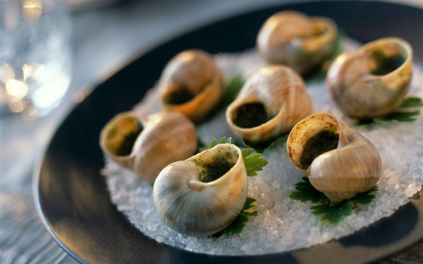 snails_2259201k